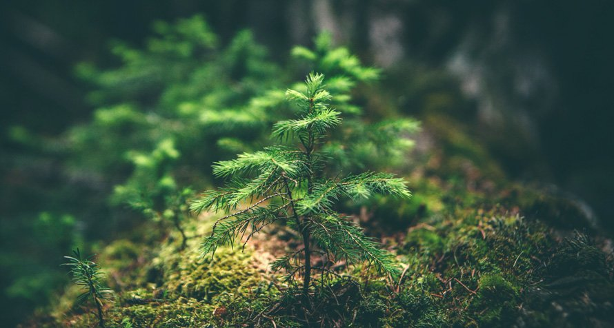 Premie zalesieniowe od ARiMR